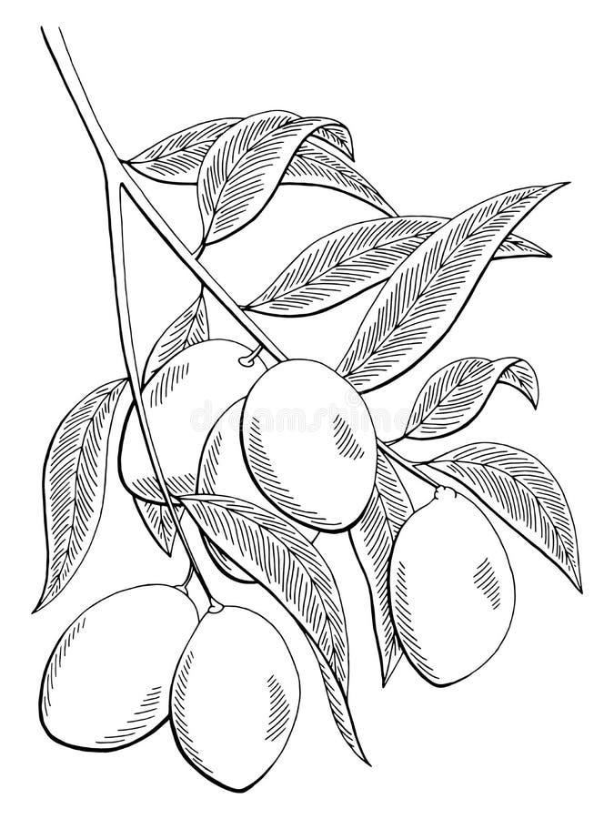 Il bianco grafico del nero del ramo della frutta del mango ha isolato l'illustrazione di schizzo royalty illustrazione gratis