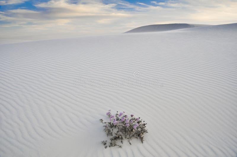 Il bianco insabbia il monumento nazionale, New Mexico (U.S.A.) immagine stock