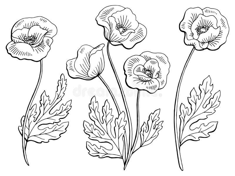 Il bianco nero grafico del fiore del papavero ha isolato l'illustrazione di schizzo royalty illustrazione gratis