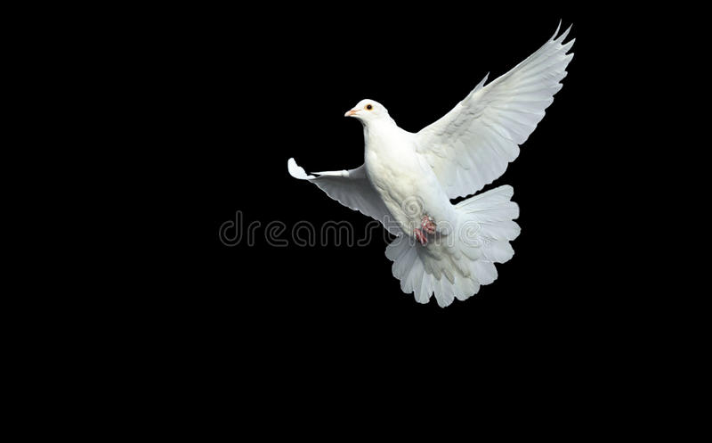 Il bianco si è tuffato nel volo libero immagine stock