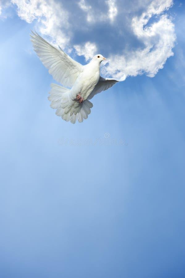 Il bianco si è tuffato nel volo libero fotografie stock libere da diritti