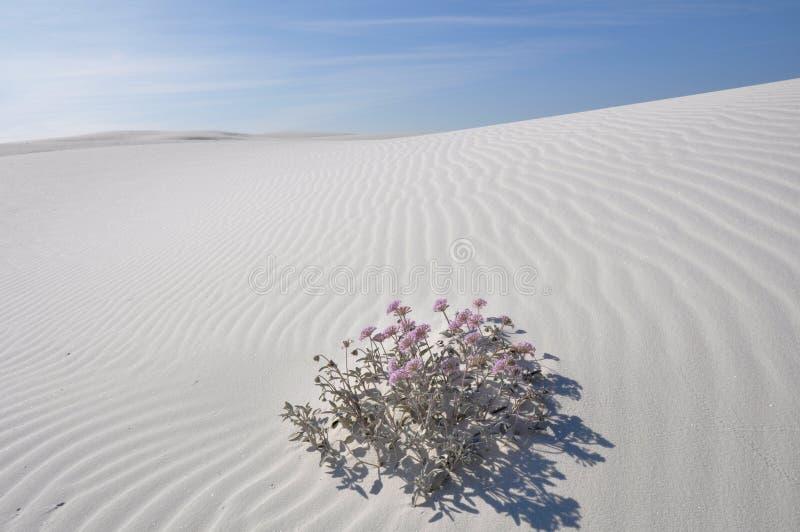 Il bianco smeriglia il monumento nazionale, New Mexico fotografia stock
