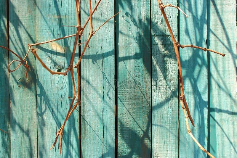 Il blu di legno ha dipinto il recinto con i rami e le ombre asciutti come fondo di legno di struttura immagini stock