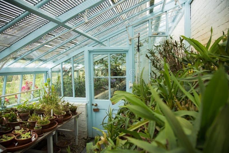 Il blu ha dipinto la serra murata di vetro con i lotti delle piante e dei fiori, dell'interno fotografia stock