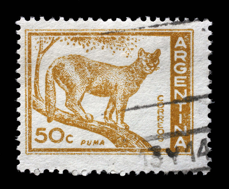 Il bollo stampato in Argentina mostra il puma fotografie stock libere da diritti