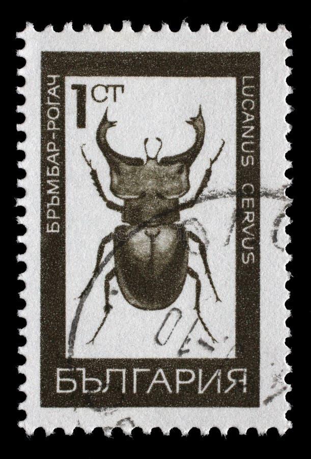 Il bollo stampato in Bulgaria mostra l'immagine di un cervo di lucanus fotografia stock libera da diritti