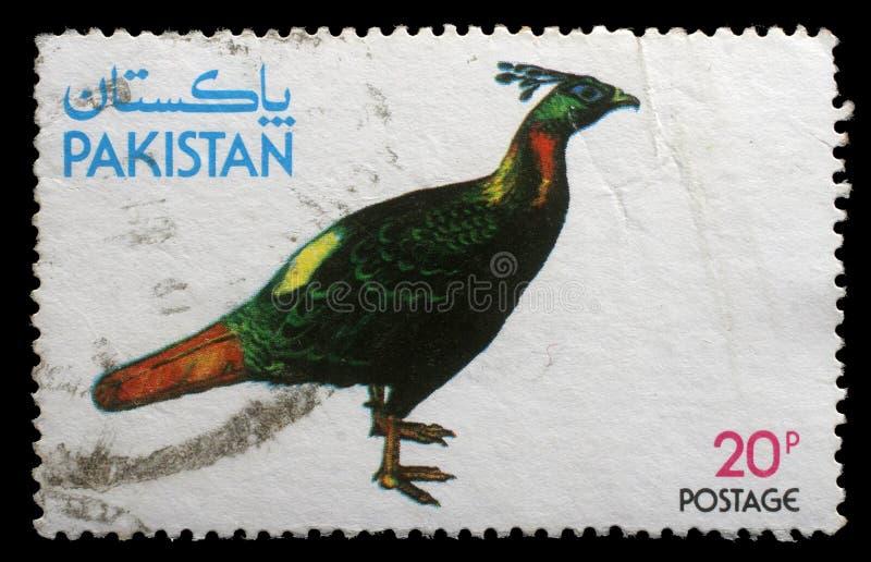 Il bollo stampato dal Pakistan mostra il fagiano di Kalij fotografia stock libera da diritti