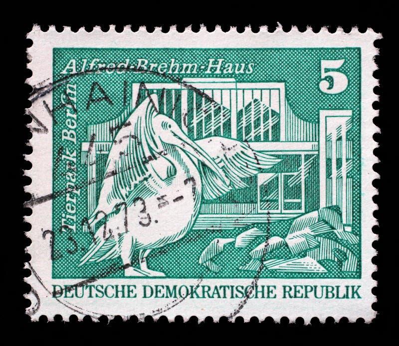Il bollo stampato in Germania mostra il pellicano bianco e Alfred Brehm House orientali, Tierpark, Berlino fotografia stock libera da diritti