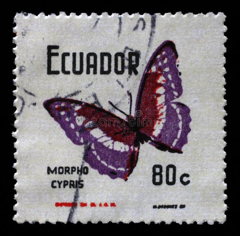Il bollo stampato nell'Ecuador mostra a farfalle i cypris di Morpho fotografia stock libera da diritti