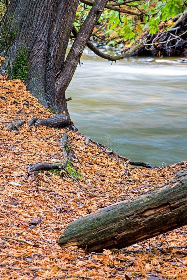 Il bordo del fiume di Cedar Covered Ground At The immagini stock