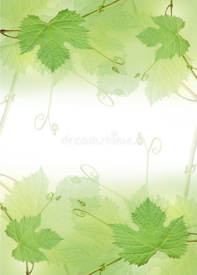 Il bordo verde del foglio dell'uva immagini stock