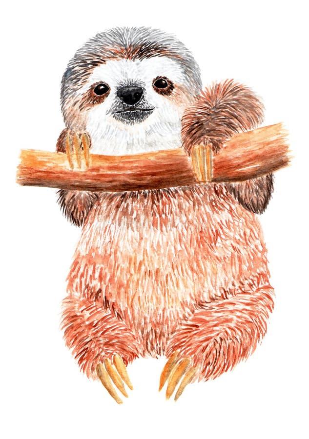 Il bradipo sta appendendo su un ramo di albero Illustrazione dell'acquerello immagini stock