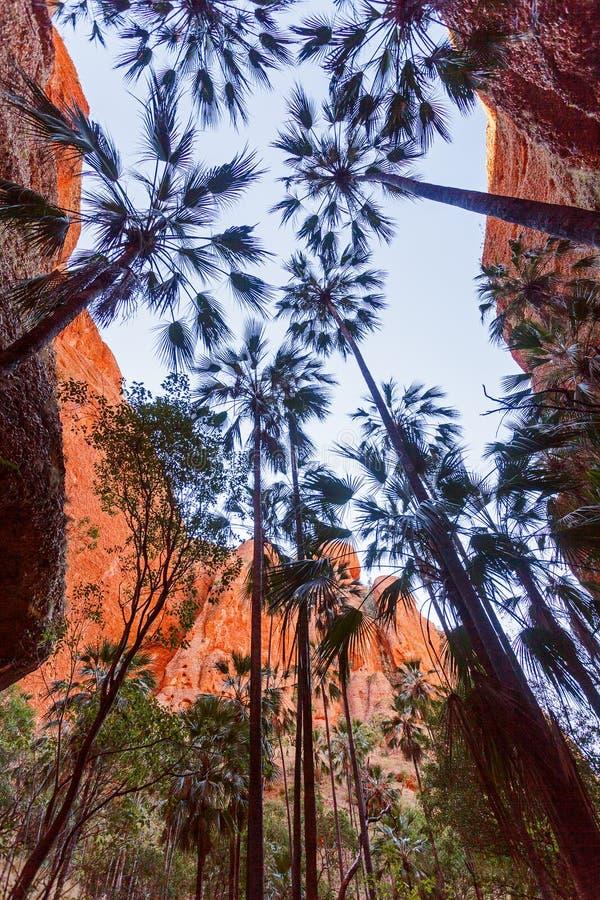 Il Bungle pasticcia in Australia occidentale fotografia stock libera da diritti