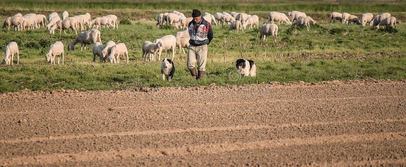 Il buon pastore fotografia stock
