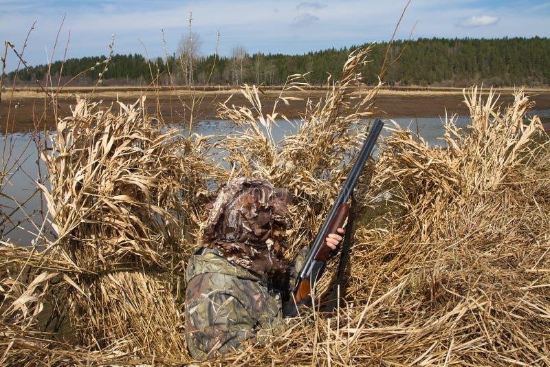 Il cacciatore dell'anatra si siede nel riparo durante la caccia immagine stock