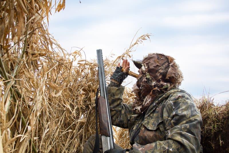 Il cacciatore si nasconde nelle canne ed attira le anatre immagini stock libere da diritti