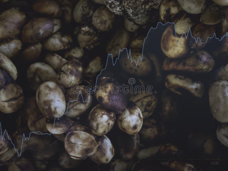 Il caffè dello zibetto ha arrostito il colore del tè del fagiolo e l'affare nero di vendita del prodotto di colore su e cresce de fotografie stock