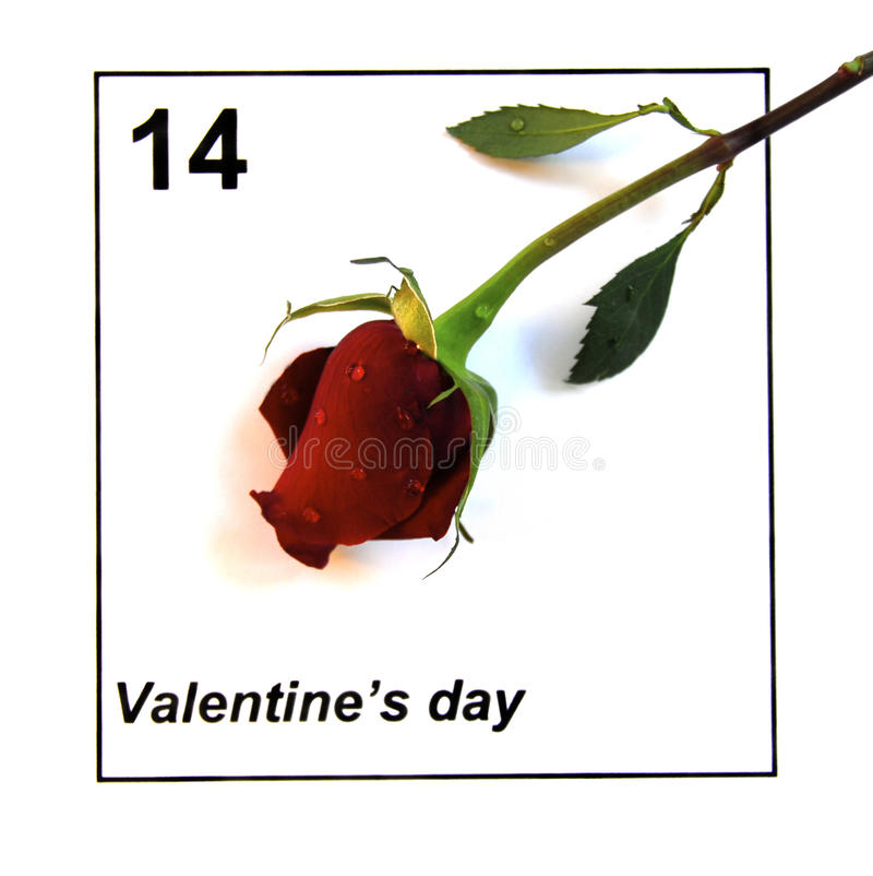 Il calendario di giorno dei biglietti di S. Valentino con singolo è aumentato immagini stock libere da diritti
