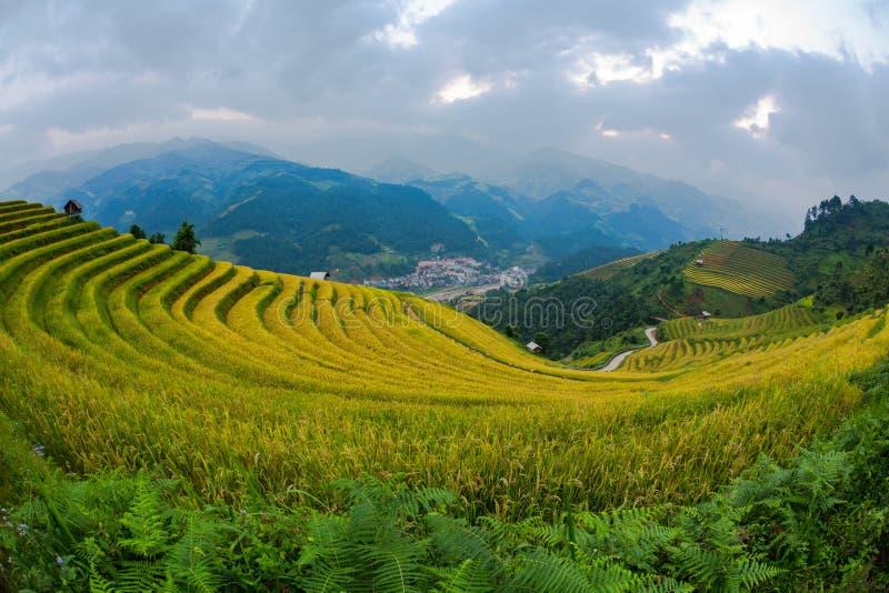 Il campo dei terrazzi del riso abbellisce bello immagine stock
