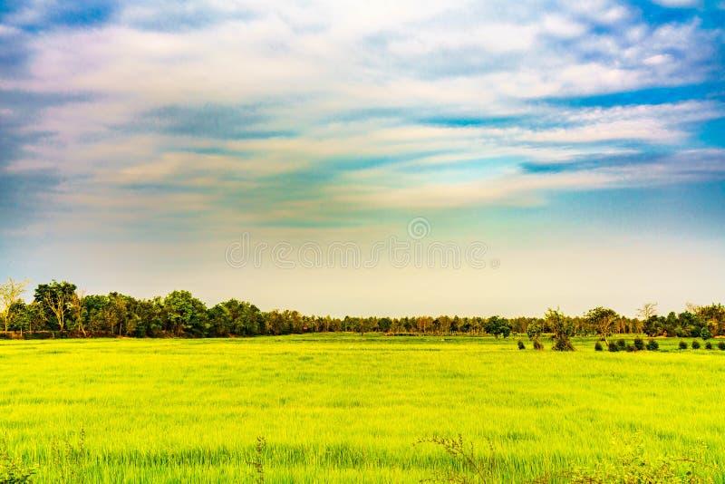 Il campo dell'agricoltore è bello paesaggio fotografia stock libera da diritti