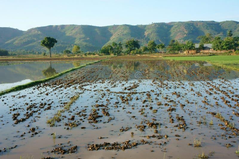 Il campo dell'agricoltura, l'albero, montagna, riflette fotografia stock