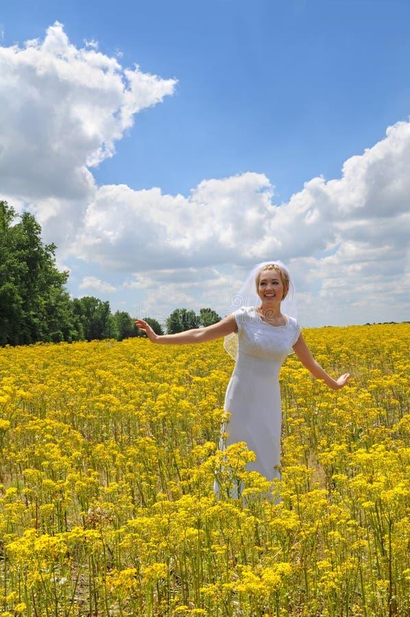 il campo della sposa fiorisce il colore giallo fotografia stock libera da diritti