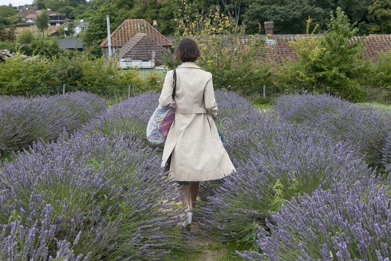 Il campo di lavanda all'azienda agricola della lavanda di Mayfield sul Surrey si scola Fuoco selettivo Fuoco selettivo Donna in b fotografia stock libera da diritti