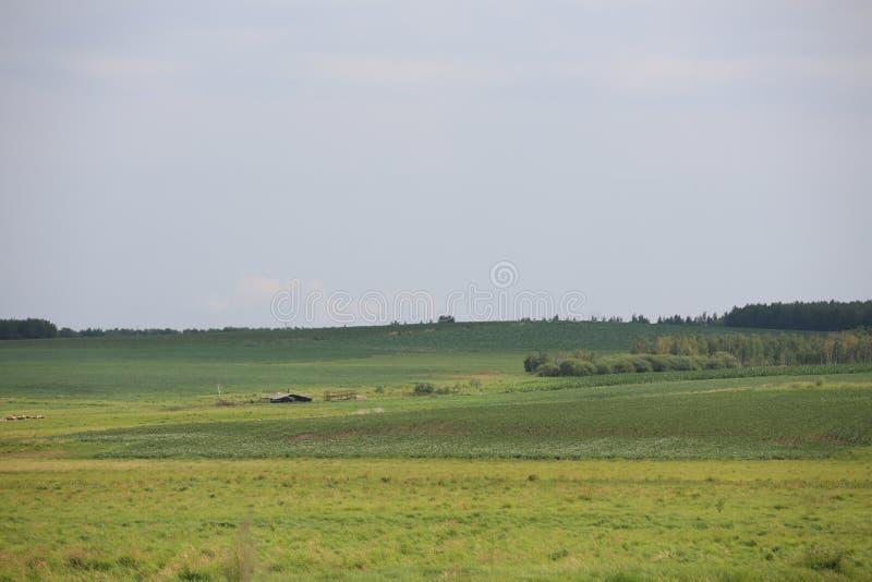 Il campo verde in Qinghai immagini stock