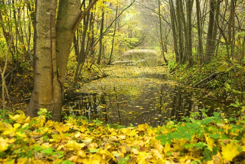 Il canale con acqua in legno. fotografia stock