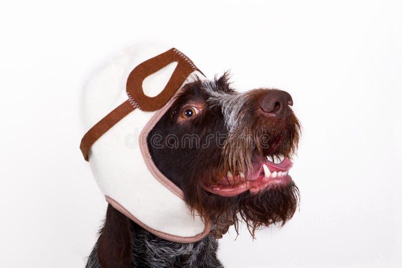 Il cane è pilota fotografie stock