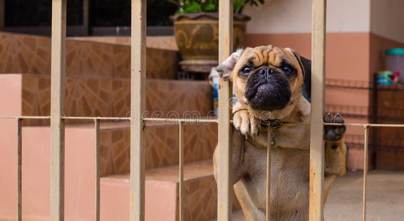 Il cane è stato bloccato nella casa immagini stock libere da diritti