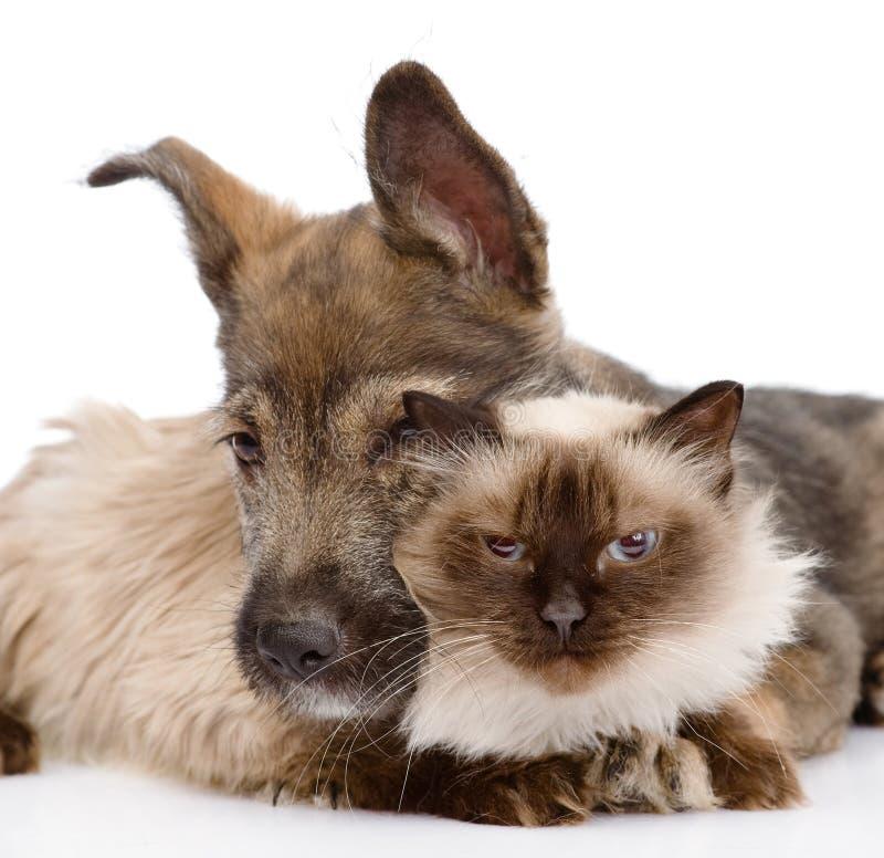 Il cane abbraccia un gatto Isolato su priorità bassa bianca fotografie stock libere da diritti