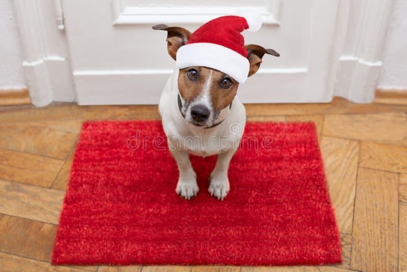 Il cane aspetta la camminata con il guinzaglio fotografia stock