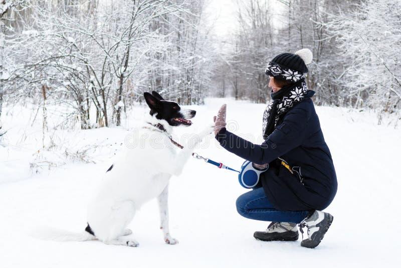 il cane bianco Nero sta dando ad una zampa il suo proprietario su un fondo della foresta dell'inverno immagini stock libere da diritti