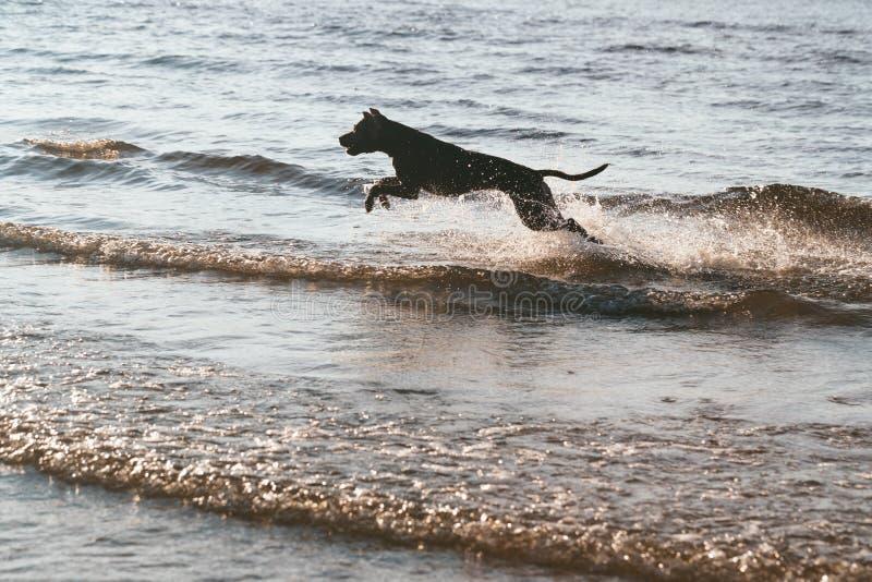 Il cane che salta sopra le onde fotografie stock