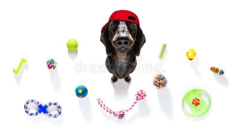 Il cane curioso cerca con i giocattoli pronti a giocare immagini stock libere da diritti