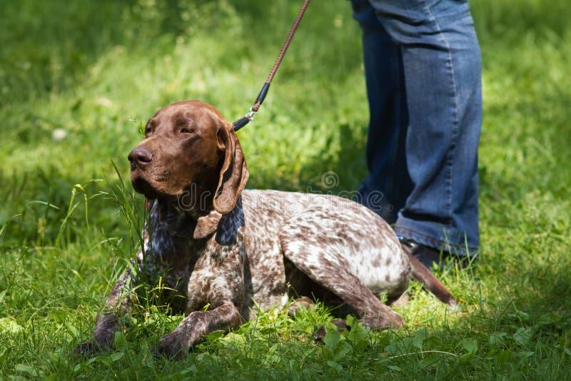 Il cane da caccia si trova ai piedi del suo proprietario fotografia stock libera da diritti