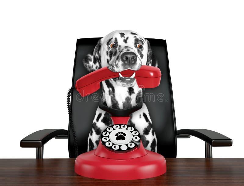 Il cane dalmata sta parlando per il vecchio telefono automatico rosso Isolato su bianco immagini stock