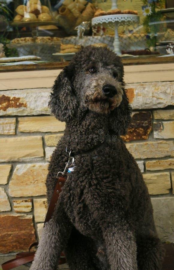 Il cane dei panettieri immagini stock libere da diritti