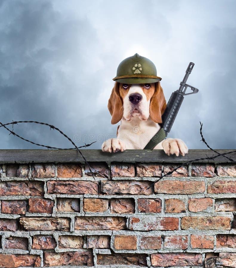 Il cane della sentinella con la pistola fotografia stock