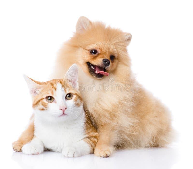 Il cane dello Spitz abbraccia un gatto. esaminando macchina fotografica. immagine stock
