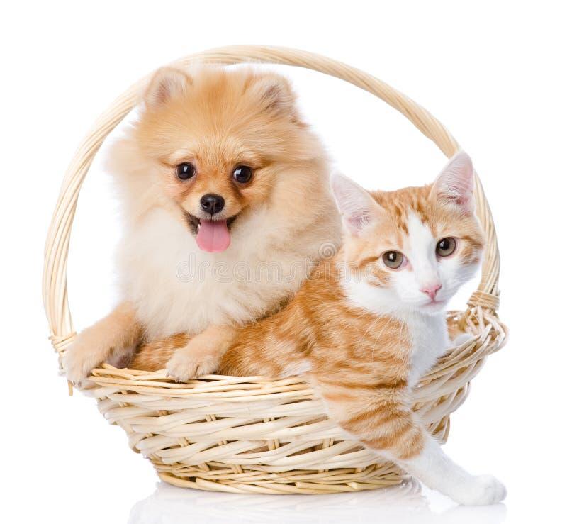 Il cane dello Spitz abbraccia una merce nel carrello del gatto fotografia stock
