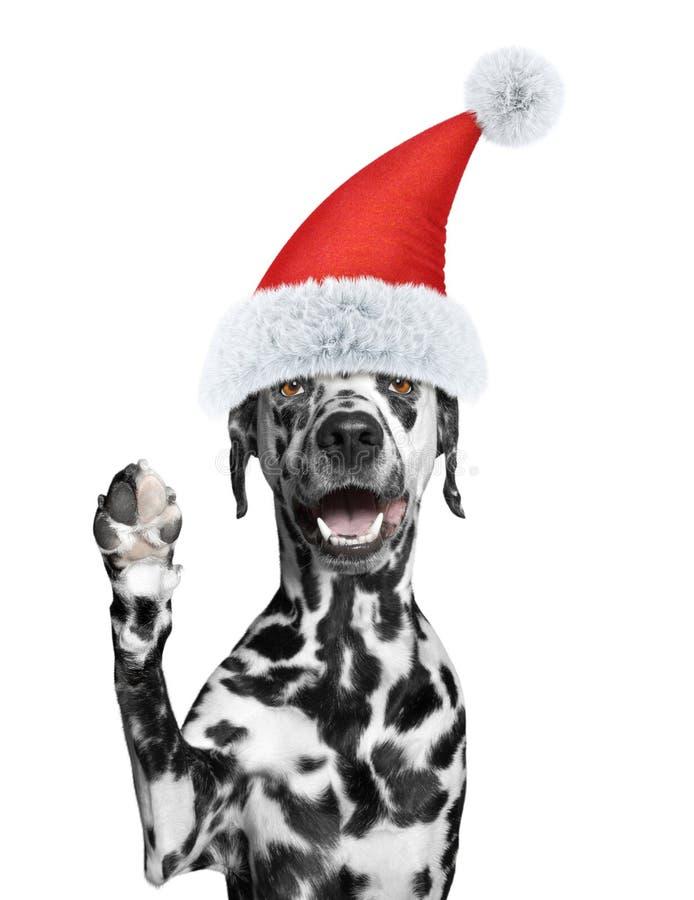 Il cane di Santa sta accogliendovi fotografia stock libera da diritti