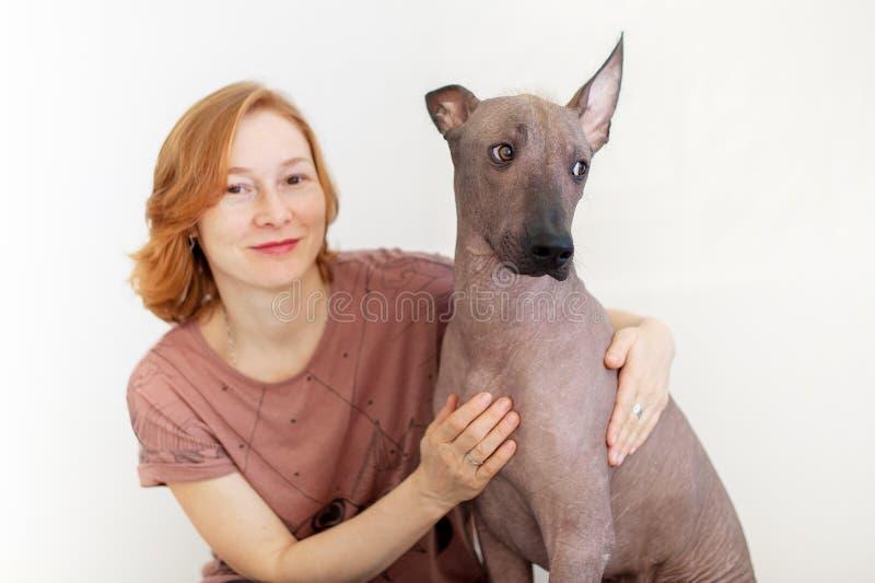 Il cane esamina uno un altro nell'incredulità immagini stock libere da diritti