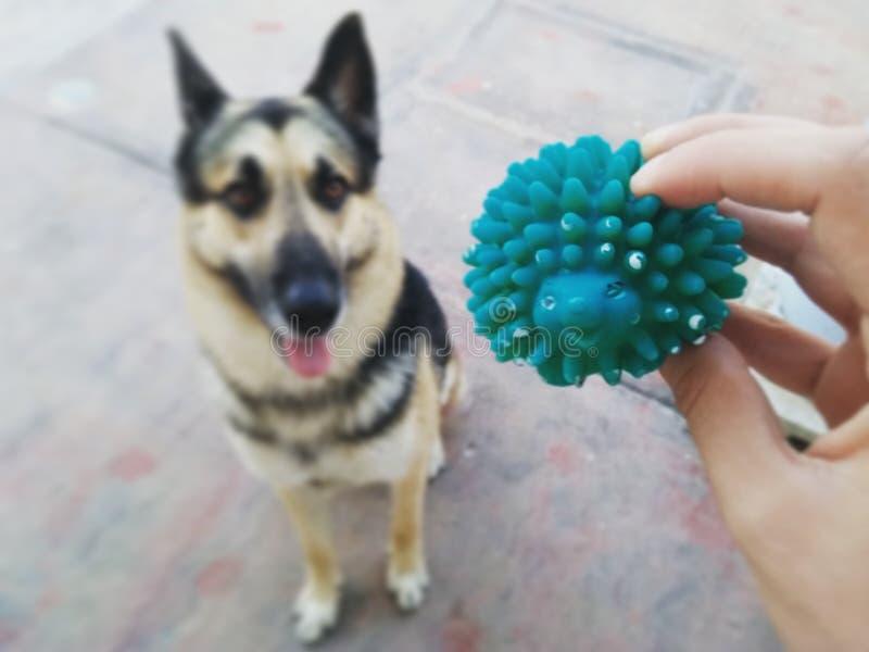 Il cane grazioso vuole giocare fotografia stock