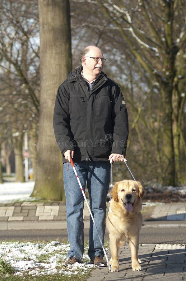Il cane guida sta aiutando un uomo cieco fotografie stock