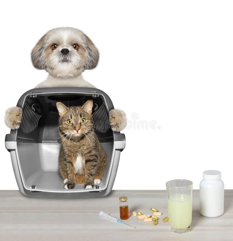 Il cane ha portato il suo amico del gatto alla clinica del veterinario immagine stock libera da diritti