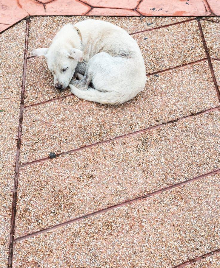 Il cane malato solo sta dormendo fotografia stock libera da diritti