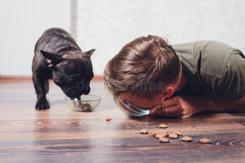 Il cane mangia l'alimento l'ospite mangia il cibo per cani concetto di attrazione dell'interesse in alimento asciutto problema di immagini stock