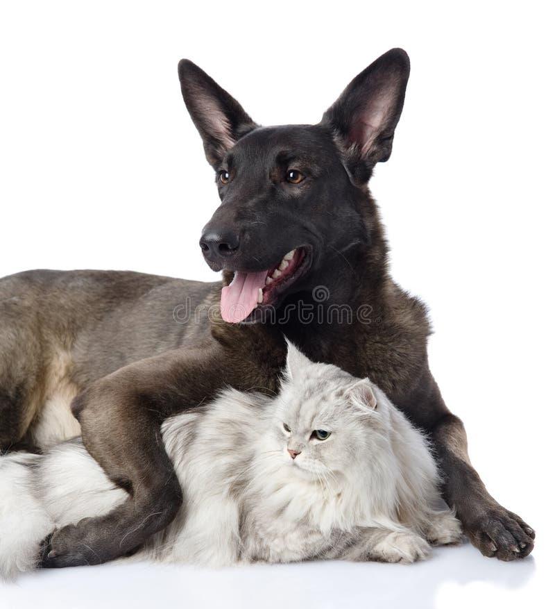 Il cane nero abbraccia un gatto Sguardo via immagini stock libere da diritti